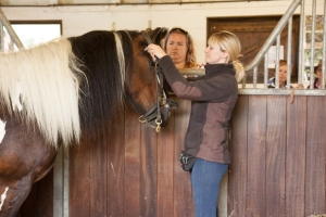 training a horse to be bridled