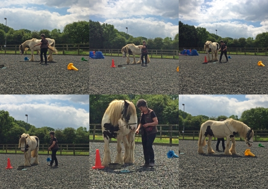 Horse being trained
