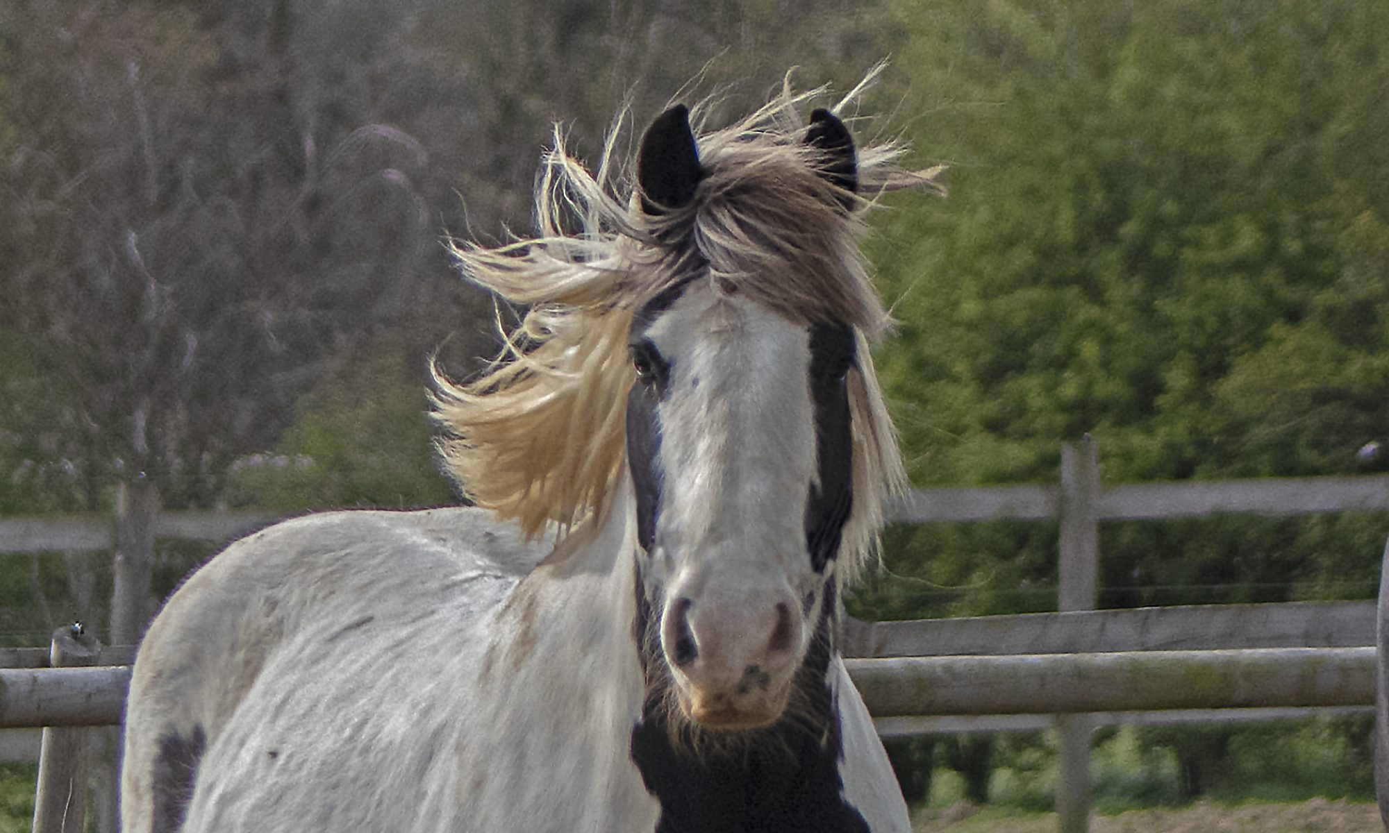 Positive Horsemanship.